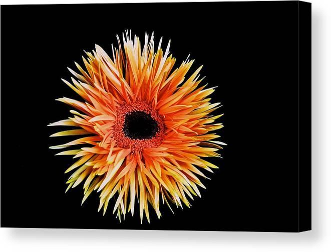 Orange Flower Canvas Print featuring the photograph Orange Flower by Kristina Deane