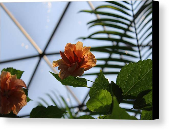 Orange Canvas Print featuring the photograph Orange Flower by Sandra Pearsall