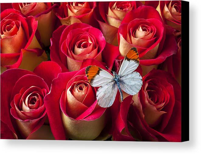 Flowers Canvas Print featuring the photograph Orange Tip Butterfly by Garry Gay