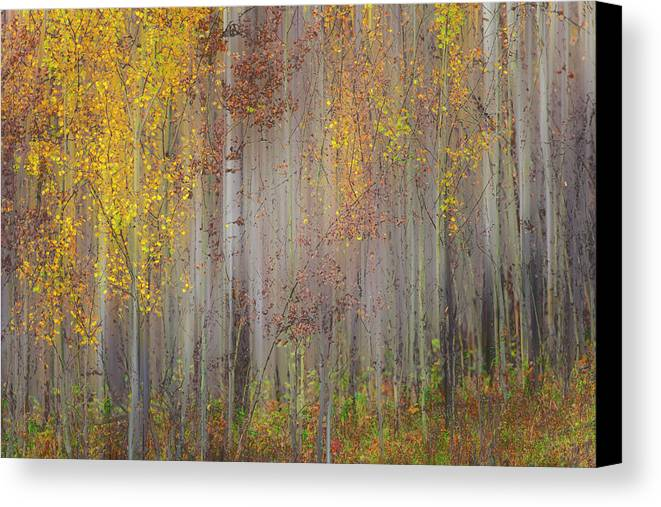 Forest Canvas Print featuring the photograph Painting Of Trees In A Forest In Autumn by Ron Harris