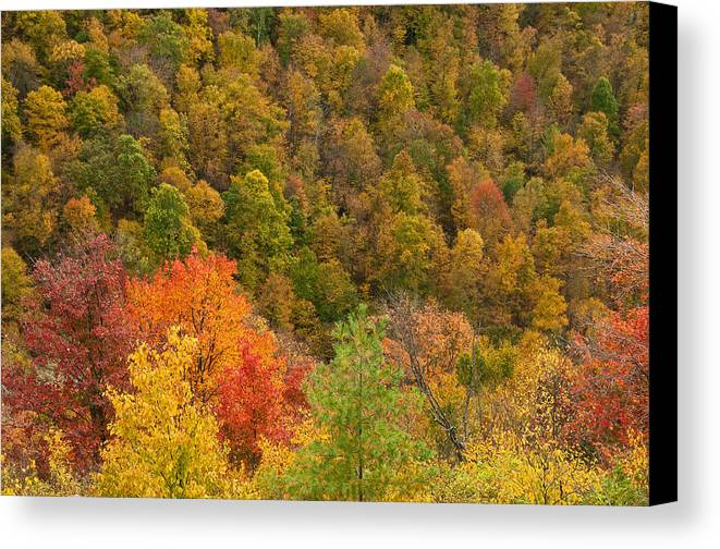 Foliage Canvas Print featuring the photograph Painting With God by Jim Southwell