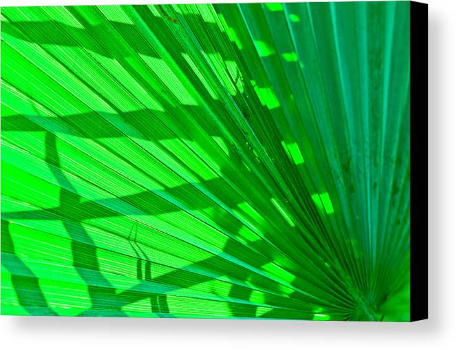Palm Frond Canvas Print featuring the photograph Palm Frond by Ben Graham