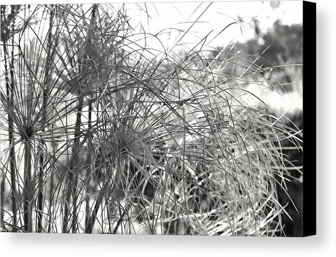 Papyrus Canvas Print featuring the photograph Papyrus Black And White by Sylvia Thornton