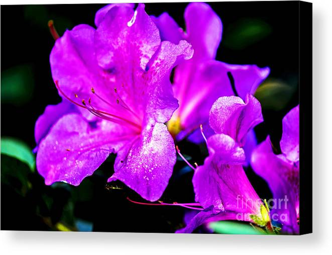 Nature Canvas Print featuring the photograph Passion Of Purple by Elvis Vaughn