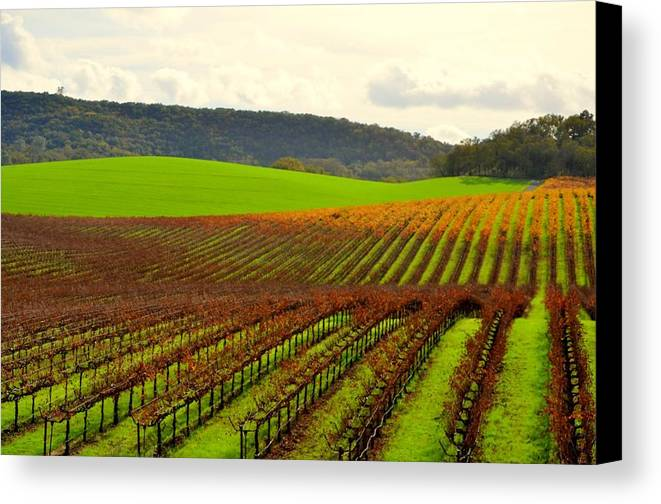 Vineyard Canvas Print featuring the photograph Pastoral Vineyards Of Asti by Antonia Citrino