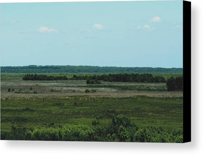 Outdoors Canvas Print featuring the photograph Payne's Prairie by April Wietrecki Green