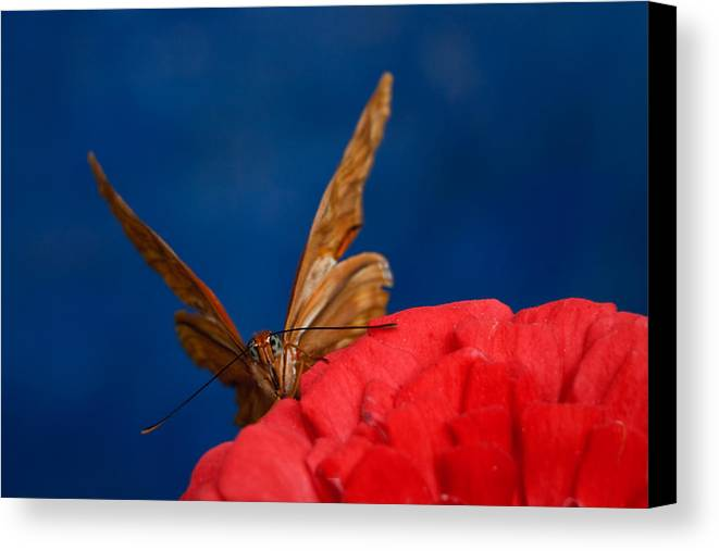 Blue Bug Canvas Print featuring the photograph Peek A Boo by Beth Sargent