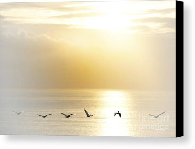 Pelican Art Canvas Print featuring the photograph Pelicans Over Malibu Beach California by Artist and Photographer Laura Wrede