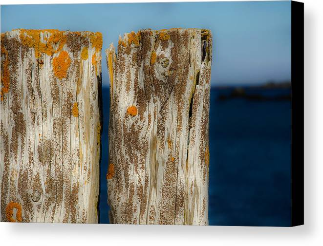 Pilings Canvas Print featuring the photograph Pilings At Port Kirwan by David Stone