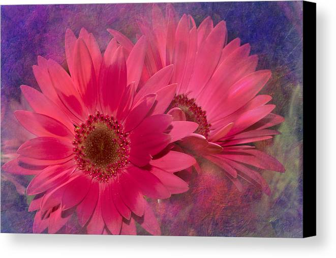 Flower Canvas Print featuring the digital art Pink Daisies Abstract by Phyllis Denton