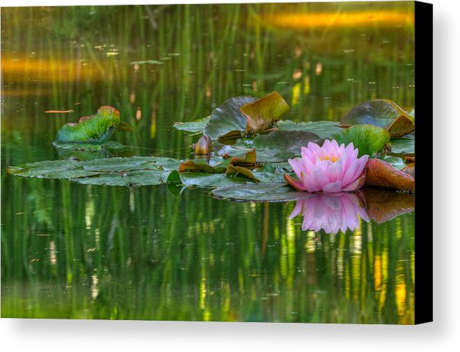 California Canvas Print featuring the photograph Pink Lotus Flower by Beth Sargent