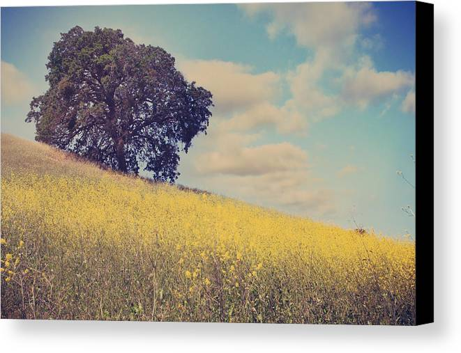 Mt. Diablo State Park Canvas Print featuring the photograph Please Send Some Hope by Laurie Search