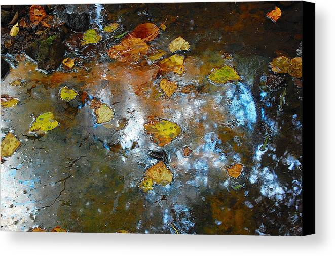 Flowers Canvas Print featuring the photograph Pond Scum by Jim Southwell