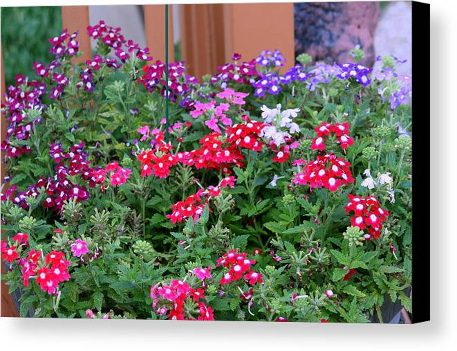 Flowers Canvas Print featuring the photograph Pretty Little Posies by Kay Novy