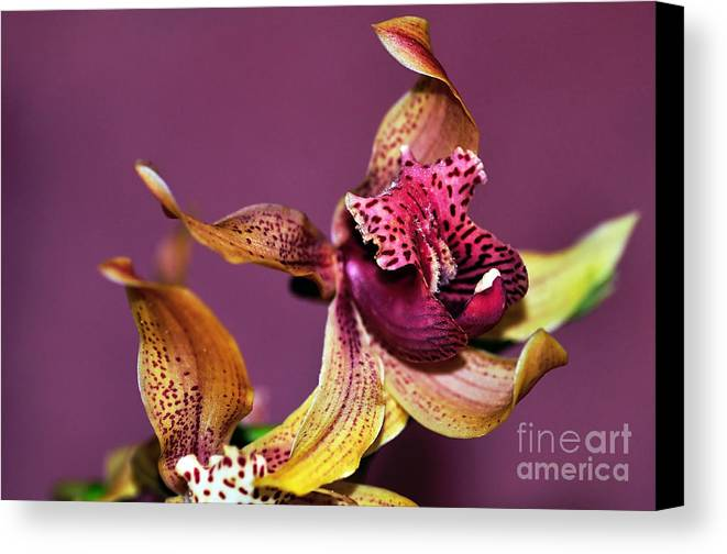 Photography Canvas Print featuring the photograph Pretty Orchid On Pink by Kaye Menner