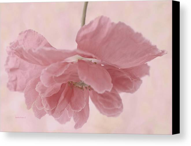 Poppy Canvas Print featuring the photograph Pretty Pink Poppy Macro by Sandra Foster