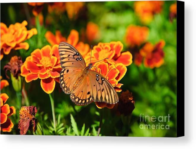 Butterfly Canvas Print featuring the photograph Proboscis by Charles Dobbs