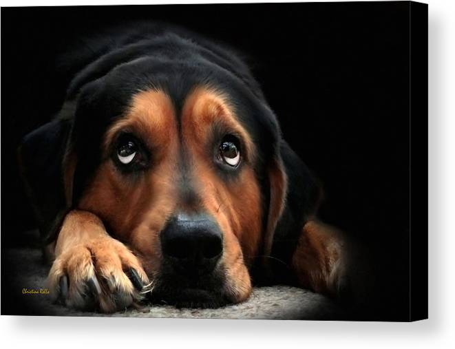 Puppy Dog Canvas Print featuring the mixed media Puppy Dog Eyes by Christina Rollo