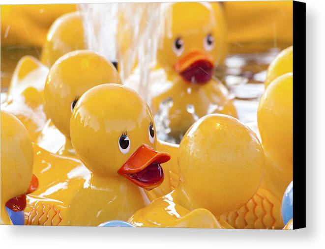 Rubber Ducky Canvas Print featuring the photograph Quackers by Caitlyn Grasso