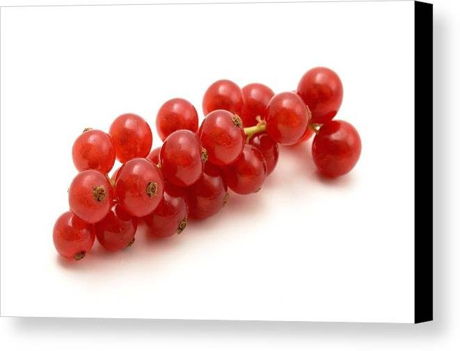 White Background Canvas Print featuring the photograph Red Currant by Fabrizio Troiani