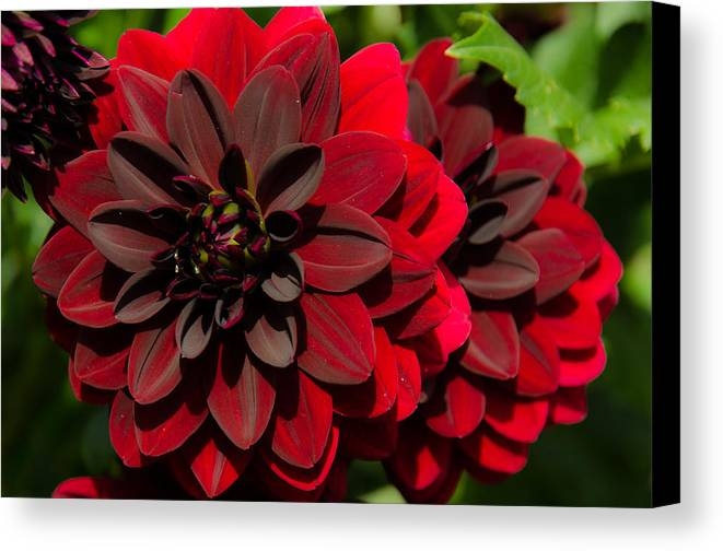 Floral Canvas Print featuring the photograph Red Flower by Anastasia E