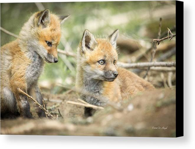 Red Canvas Print featuring the photograph Red Fox Kits by Everet Regal
