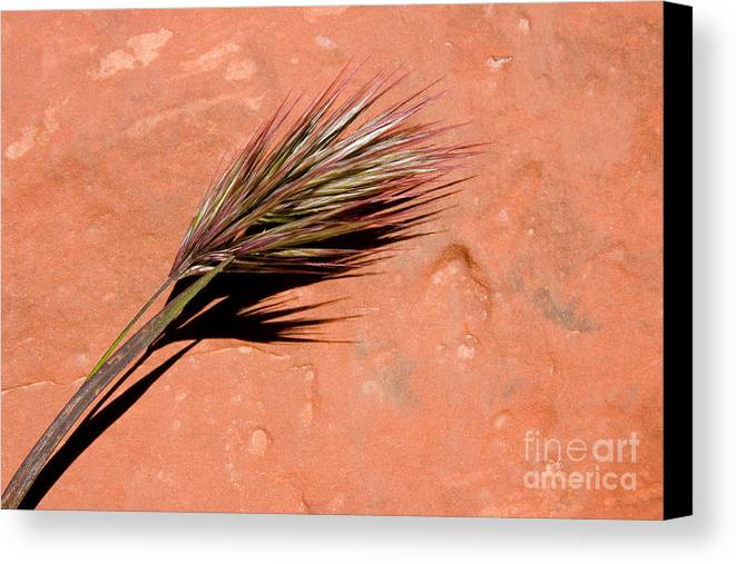 Nature Canvas Print featuring the photograph Red Rock In Arizona by Julia Hiebaum