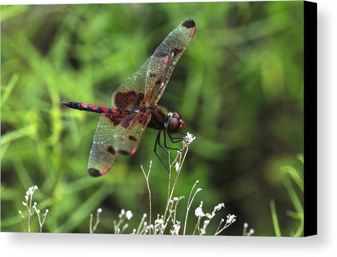 Red Saddlebags Canvas Print featuring the photograph Red Saddlebags by J Scott Davidson