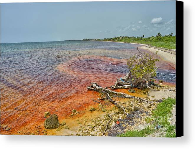 Red Sea In Mahahual Canvas Print featuring the photograph Red Sea by Salvador Penaloza