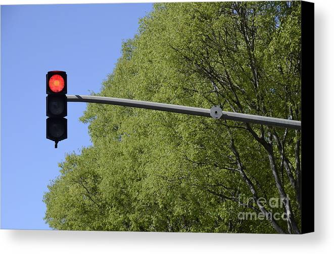 Guidance Canvas Print featuring the photograph Red Traffic Light By Trees by Sami Sarkis