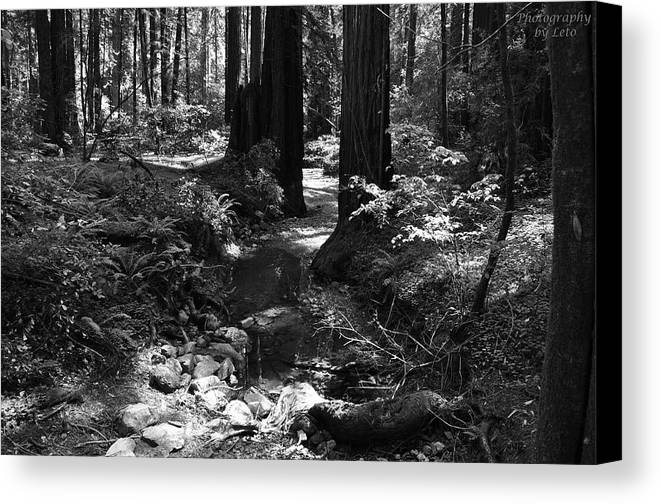 Creek Canvas Print featuring the photograph Redwood Creek by Leto Covington
