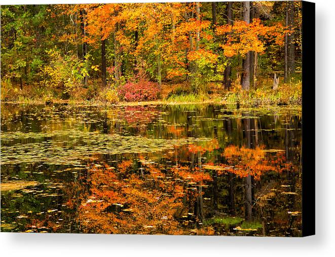 Reflecting Colors Canvas Print featuring the photograph Reflecting Colors by Karol Livote