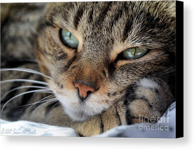 Photography Canvas Print featuring the photograph Rest by Susan Smith