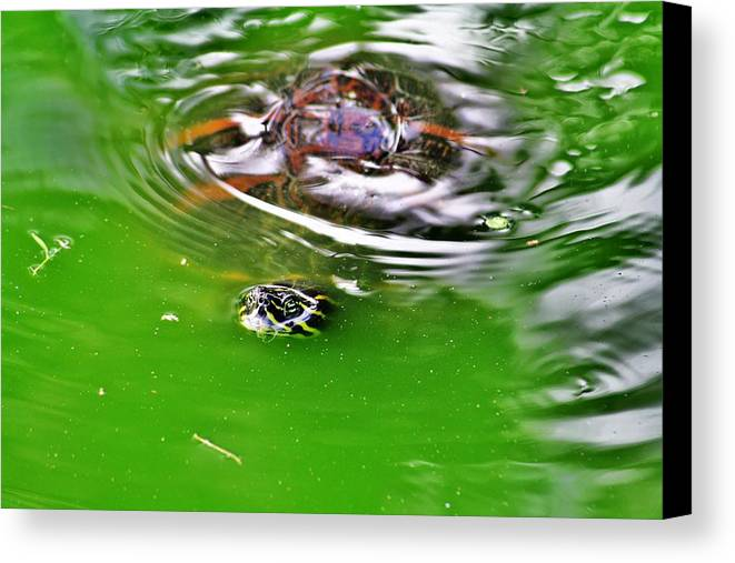 Everglades Canvas Print featuring the photograph Rippled Green by Chuck Hicks