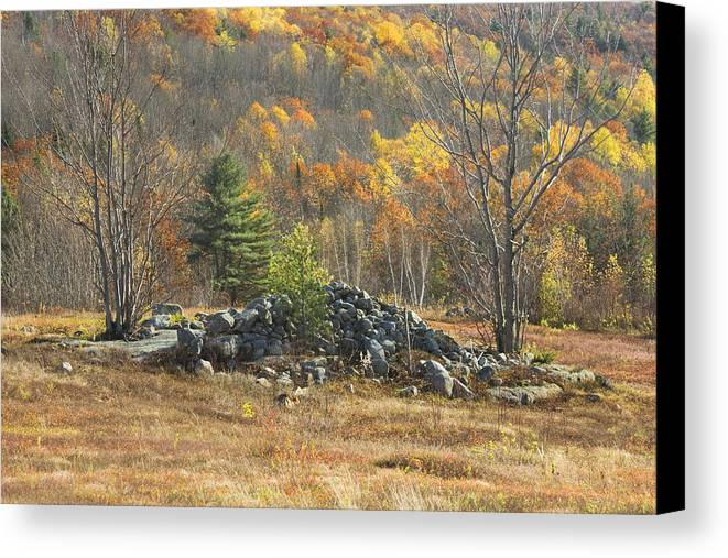 Maine Canvas Print featuring the photograph Rock Pile In Maine Blueberry Field by Keith Webber Jr