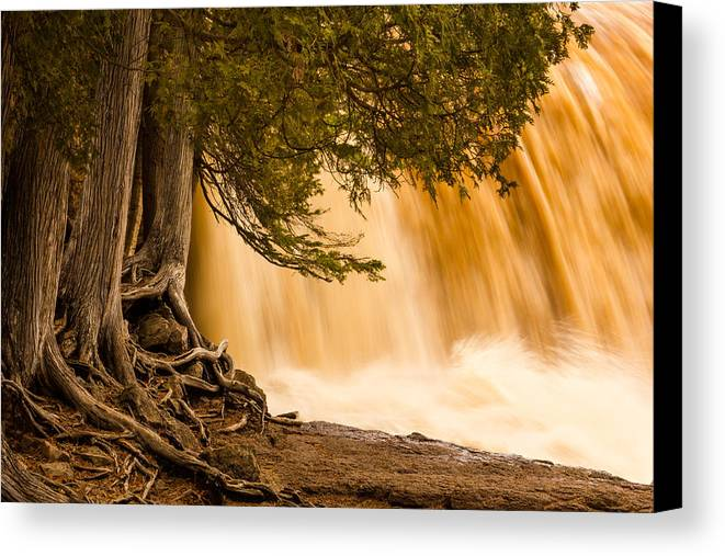 rooted In Spring mary Amerman Waterfall Cedar Tree Roots tree Roots gooseberry Falls lake Superior minnesota northern Minnesota Nature greeting Cards Spring spring Melt north Shore Powerful Humbling Beautiful nature Is Art may 1st 2013 Canvas Print featuring the photograph Rooted In Spring by Mary Amerman