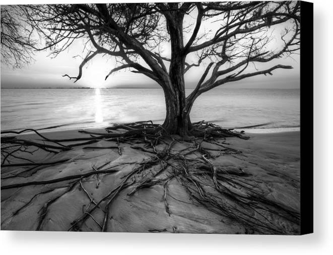 Clouds Canvas Print featuring the photograph Roots Beach In Black And White by Debra and Dave Vanderlaan