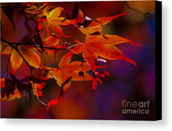 Leaves Canvas Print featuring the photograph Royal Autumn A by Jennifer Apffel