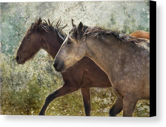Pryor Mustangs Canvas Print featuring the photograph Running Free - Pryor Mustangs by Belinda Greb