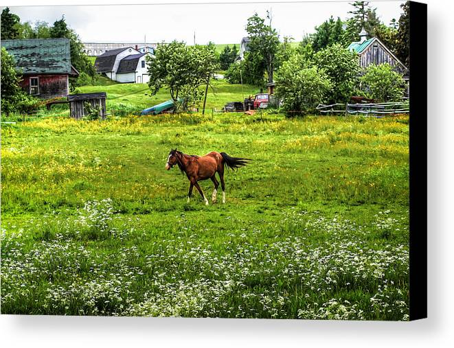 Horse Canvas Print featuring the photograph Running Free by Gary Smith