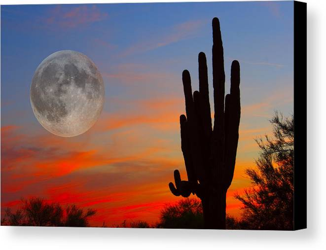 Sunrise Canvas Print featuring the photograph Saguaro Full Moon Sunset by James BO Insogna