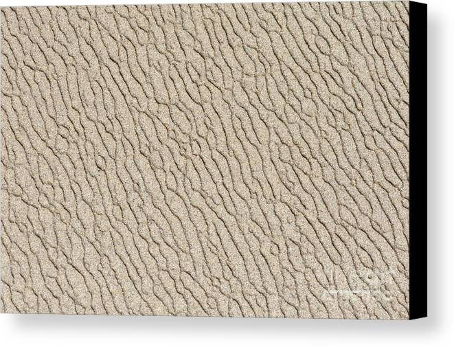Point Lobos Canvas Print featuring the photograph Sand Skin by Artist and Photographer Laura Wrede