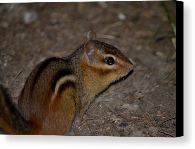 Ground Squirrel Canvas Print featuring the photograph Sanguine-55 by Luke Jones