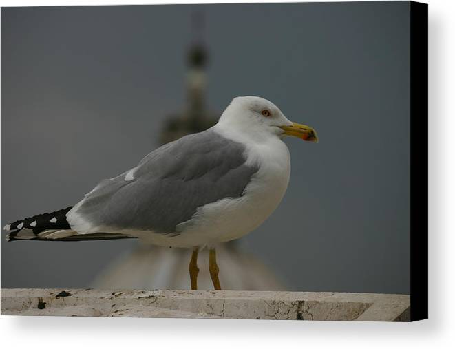 Gull Canvas Print featuring the photograph Sea Gull by Anika Kanter