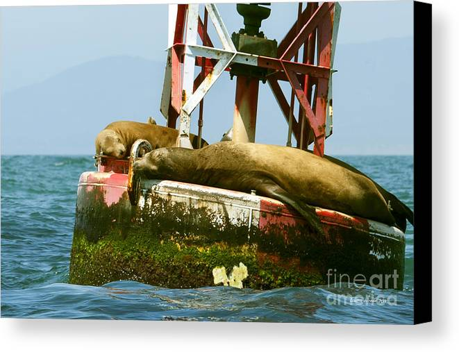 Sea Lions Canvas Print featuring the photograph Sea Lions Floating On A Buoy In The Pacific Ocean In Dana Point Harbor by Artist and Photographer Laura Wrede