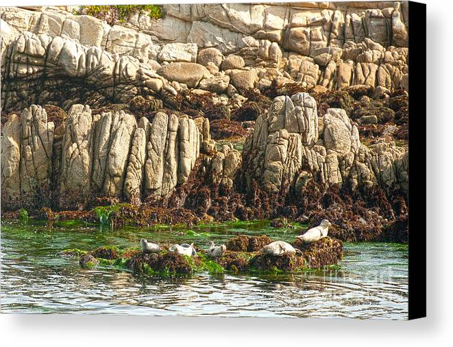 Sea Lions In Monterey Bay Canvas Print featuring the photograph Sea Lions In Monterey Bay by Artist and Photographer Laura Wrede