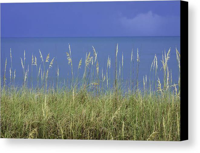 4th Canvas Print featuring the photograph Sea Oats By The Blue Ocean And Sky by Karen Stephenson