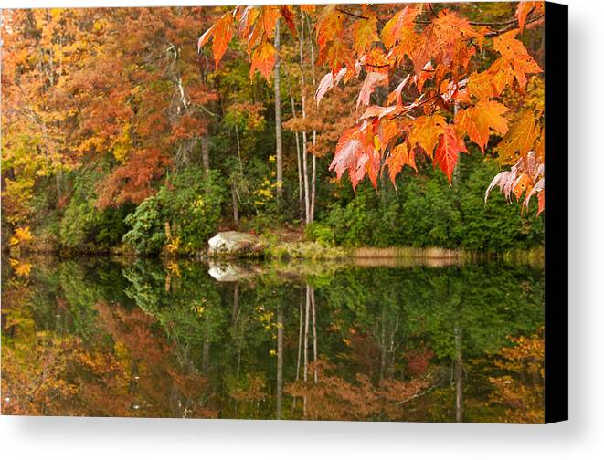 Foliage Canvas Print featuring the photograph Searching by Jim Southwell
