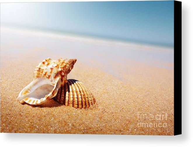 Abstract Canvas Print featuring the photograph Seashell And Conch by Carlos Caetano