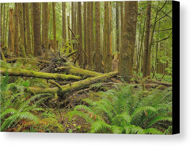 Forest Canvas Print featuring the photograph Seeing Forest Through The Trees by Jim Southwell
